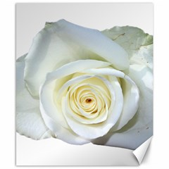 Flower White Rose Lying Canvas 8  x 10
