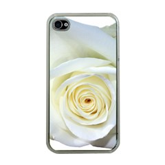 Flower White Rose Lying Apple Iphone 4 Case (clear)