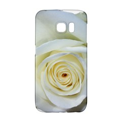 Flower White Rose Lying Galaxy S6 Edge