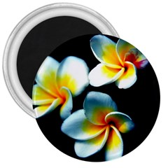 Flowers Black White Bunch Floral 3  Magnets