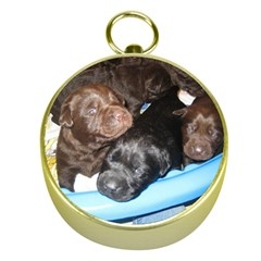 Litter Of Lab Pups Gold Compasses