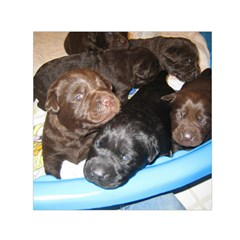 Litter Of Lab Pups Small Satin Scarf (Square)