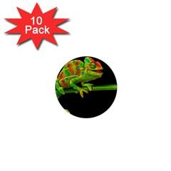 Chameleons 1  Mini Magnet (10 pack)