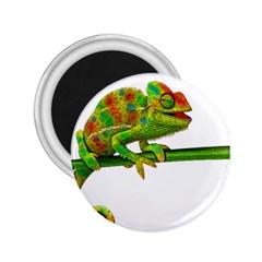 Chameleons 2.25  Magnets