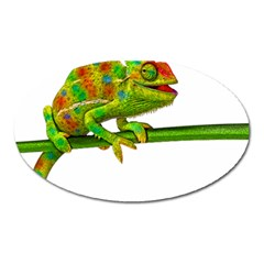 Chameleons Oval Magnet