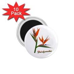 Bird Of Paradise 1 75  Magnets (10 Pack)