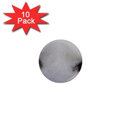 Akita Inu White Eyes 1  Mini Magnet (10 pack)