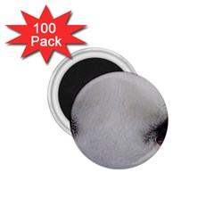 Akita Inu White Eyes 1.75  Magnets (100 pack)