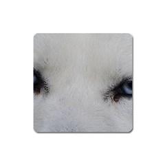 Akita Inu White Eyes Square Magnet