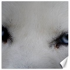 Akita Inu White Eyes Canvas 16  x 16
