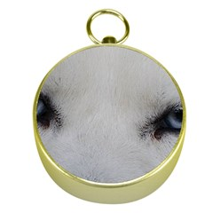 Akita Inu White Eyes Gold Compasses
