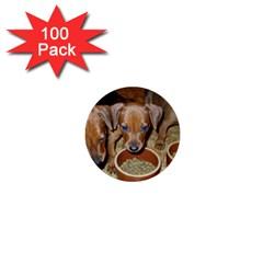 German Pinscher Puppies 1  Mini Buttons (100 pack)