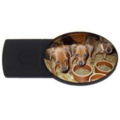 German Pinscher Puppies USB Flash Drive Oval (2 GB)