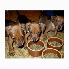 German Pinscher Puppies Small Glasses Cloth (2-Side)