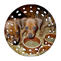 German Pinscher Puppies Ornament (Round Filigree)