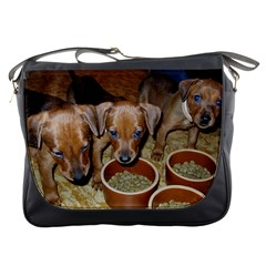German Pinscher Puppies Messenger Bags
