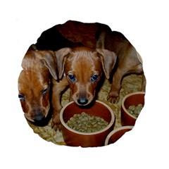 German Pinscher Puppies Standard 15  Premium Round Cushions