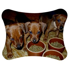 German Pinscher Puppies Jigsaw Puzzle Photo Stand (Bow)