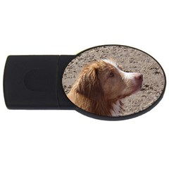 Nova Scotia Duck Tolling Retriever USB Flash Drive Oval (4 GB)