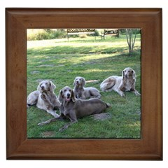 Longhair Weims Framed Tiles