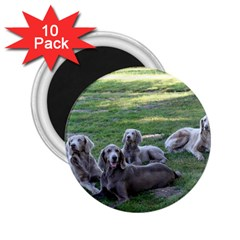 Longhair Weims 2.25  Magnets (10 pack)