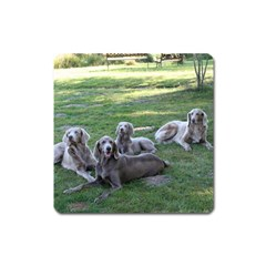 Longhair Weims Square Magnet
