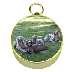 Longhair Weims Gold Compasses