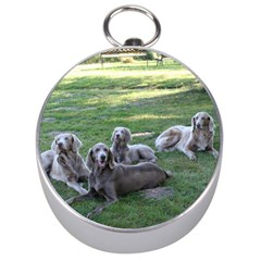 Longhair Weims Silver Compasses