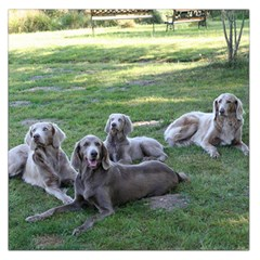 Longhair Weims Large Satin Scarf (Square)
