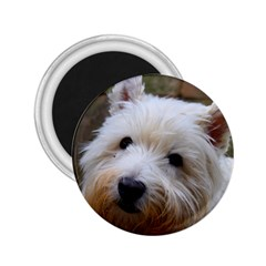 West Highland White Terrier 2.25  Magnets