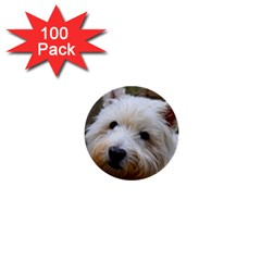 West Highland White Terrier 1  Mini Buttons (100 pack)