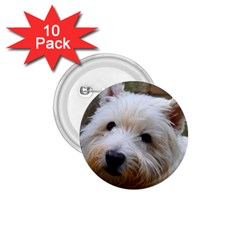 West Highland White Terrier 1.75  Buttons (10 pack)