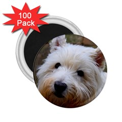 West Highland White Terrier 2.25  Magnets (100 pack)
