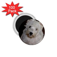 West highland white terrier puppy 1.75  Magnets (100 pack)