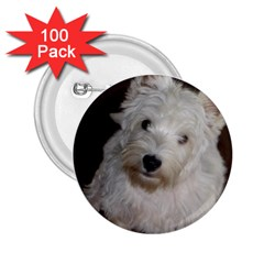 West highland white terrier puppy 2.25  Buttons (100 pack)