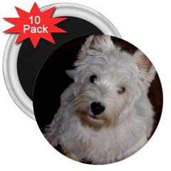 West highland white terrier puppy 3  Magnets (10 pack)