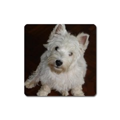 West highland white terrier puppy Square Magnet