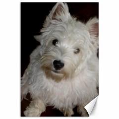 West highland white terrier puppy Canvas 12  x 18