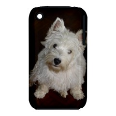 West highland white terrier puppy iPhone 3S/3GS