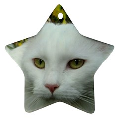 Maine Coon 4 Ornament (Star)