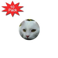 Maine Coon 4 1  Mini Magnet (10 pack)