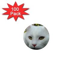 Maine Coon 4 1  Mini Magnets (100 pack)