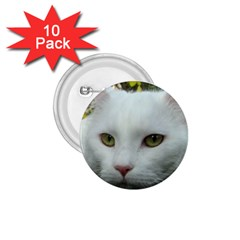 Maine Coon 4 1.75  Buttons (10 pack)