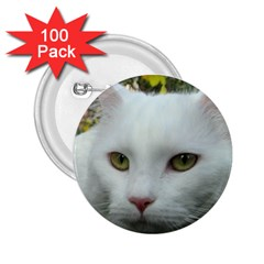 Maine Coon 4 2.25  Buttons (100 pack)