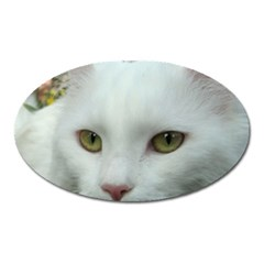 Maine Coon 4 Oval Magnet