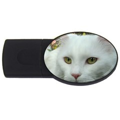 Maine Coon 4 USB Flash Drive Oval (1 GB)