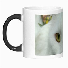 Maine Coon 4 Morph Mugs