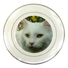 Maine Coon 4 Porcelain Plates