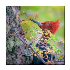 Woodpecker At Forest Pecking Tree, Patagonia, Argentina Tile Coasters