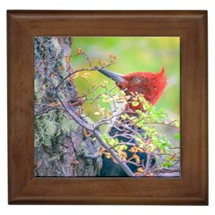 Woodpecker At Forest Pecking Tree, Patagonia, Argentina Framed Tiles